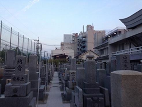 専光寺墓地 イメージ3