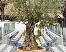 杉並堀ノ内樹木葬 オリーブ光の庭園