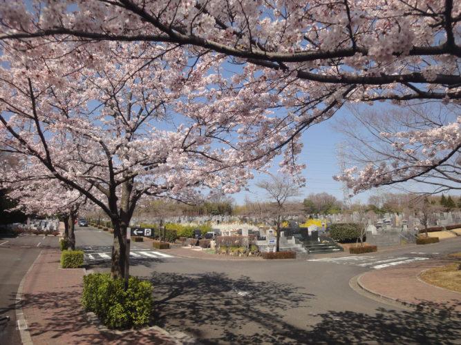 東京多摩霊園 イメージ5