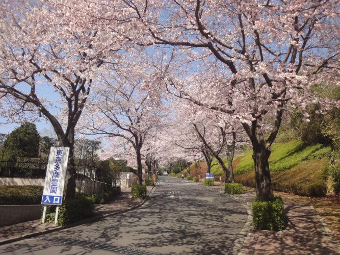 東京多摩霊園 イメージ3