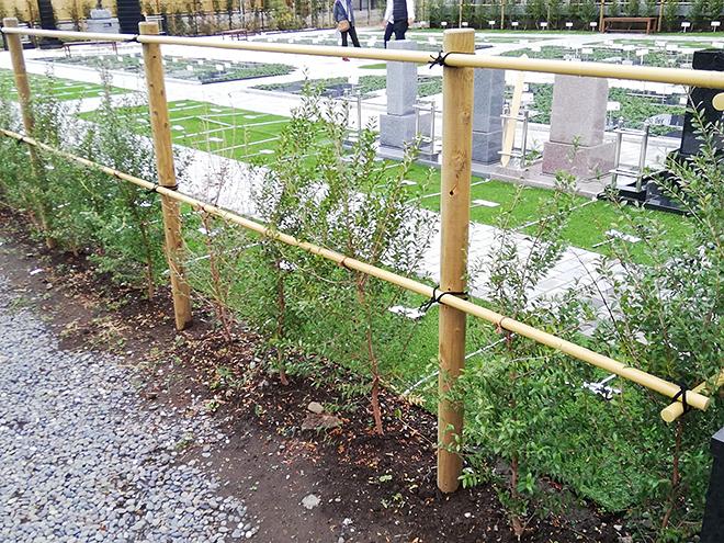 小平 寳縁の庭の生け垣
