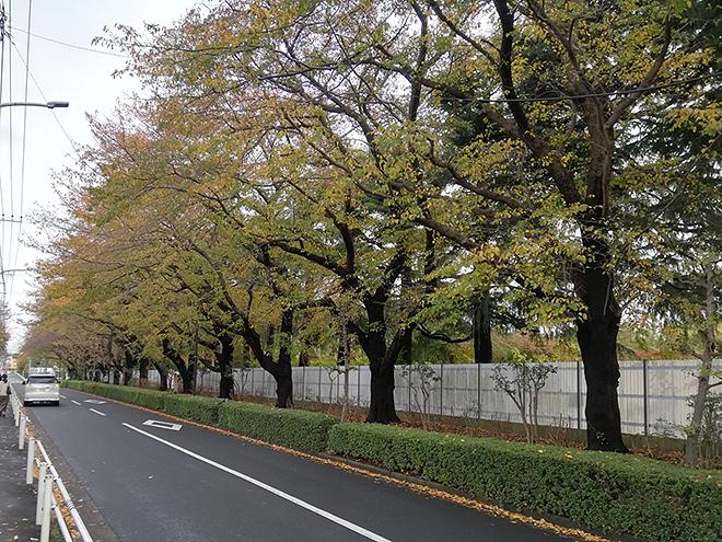 一橋学園駅から小平 寳縁の庭までの道の風景