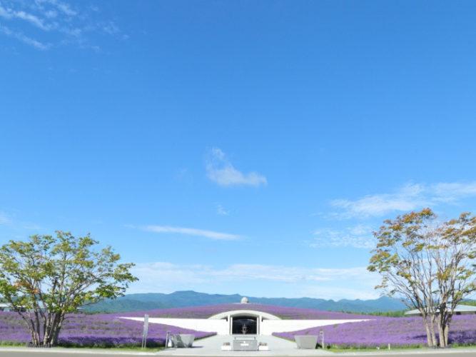 真駒内滝野霊園 やすらぎの里 ラベンダーガーデン イメージ2