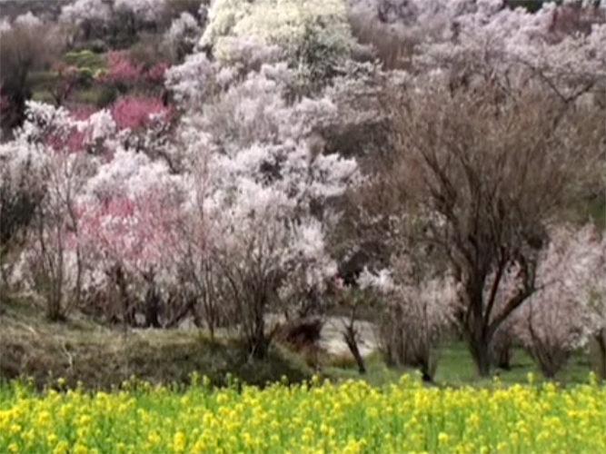 花見山 奥の院 樹木葬の杜 イメージ10