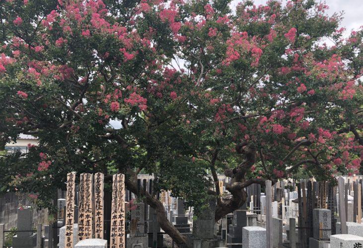 京都メモリアルパーク 樹木葬「椿」 永代供養墓 イメージ2